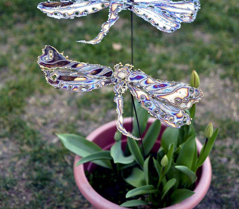 dragonfly-steel-garden